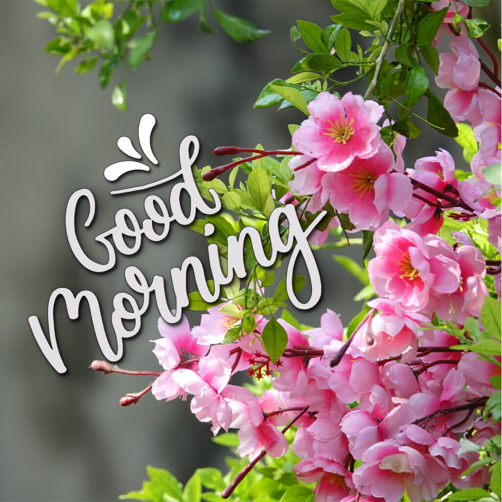 Best good morning beautiful images.